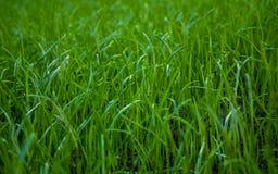 Natura, flora, giardino, erba, prato inglese, terra immagini stock libere da diritti