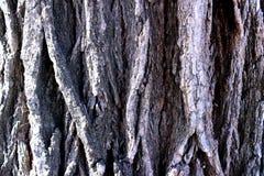 Natura, fondo, legno, tronco, superficie decorativa, sollievo immagini stock libere da diritti