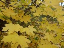 Natura, foresta di autunno, foglie, alberi Immagini Stock