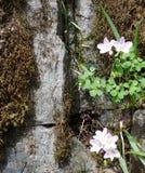 Natura głąbik zdjęcia stock