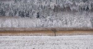Natura gelida nel sud della Svezia Immagine Stock