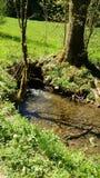 natura gruen del natur di verde del sonne del sole dell'acqua del wasser del bach del wasserloch Fotografie Stock