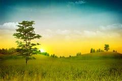 Natura Grungy. Fotografia Stock Libera da Diritti