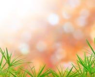 Natura-Hintergrund Stockfotografie