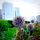 Natura i architektura Obraz Stock