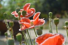 Natura i piękno obrazy stock