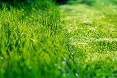 Natura i skoszona trawa zdjęcie stock