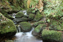 Natura i woda Zdjęcia Royalty Free