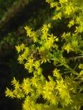 Natura impressionante di verde di qualità dell'ape Fotografie Stock Libere da Diritti