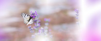 Natura incredibilmente bella Fotografia di arte Progettazione floreale di fantasia Macro astratta, primo piano Farfalla panoramic Immagini Stock Libere da Diritti