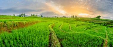 Natura Indonesia di bellezza fotografia stock libera da diritti