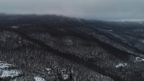 Natura innevata aerea di inverno del paesaggio del metraggio del fuco degli alberi colpo Ramo di albero di Snowy in una vista del stock footage