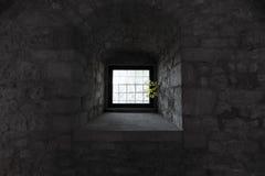 Natura inside Zdjęcie Royalty Free