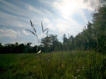 Natura jako oddzielny piękno jakby obraz stock