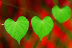 natura jest miłość Obrazy Stock