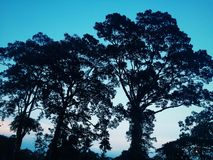 Natura Kambodża Obraz Stock