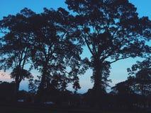 Natura Kambodża Zdjęcie Royalty Free