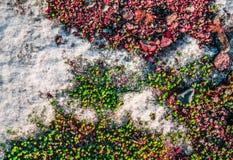 Natura kolory Obrazy Stock