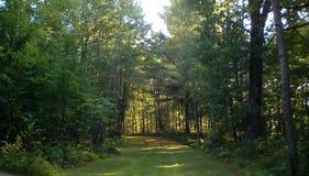 Natura korytarz zdjęcie royalty free