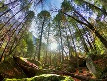Natura krajobraz w Yosemite parku narodowym zdjęcia royalty free