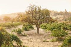 Natura krajobraz Z Zielonym drzewem W dolinie, skały Na tle obraz stock