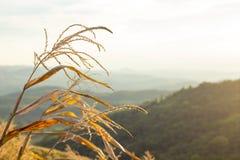 Natura krajobrazowy Piękny Tajlandia Obraz Royalty Free