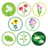 Natura kwiatu ikony set Zdjęcie Royalty Free