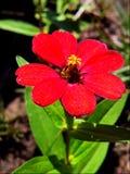 Natura kwiatu nieba błękita trawa fotografia stock