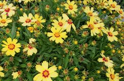 Natura kwiaty 002 Obraz Royalty Free