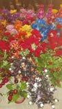 natura kwiaty Obrazy Royalty Free