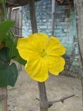 Natura, kwiaty, tapetowi kwiaty, piękna natura, wschód słońca, dzień dobry, piękna natura obrazy royalty free