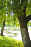 natura lake Zdjęcia Royalty Free