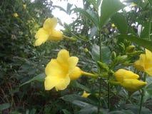 Natura lankijczyków kwiatów piękne rośliny fotografia royalty free