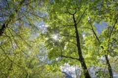Natura las i słońce fotografia stock