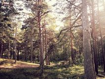Natura lettone Immagini Stock Libere da Diritti
