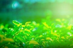 Natura liście dla tapety lub tła zdjęcia stock