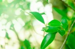 Natura liście dla tapety lub tła zdjęcie royalty free