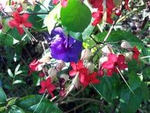 Natura liście i kwiat Zdjęcie Stock