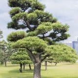 Natura lub miastowy tło z widokiem park w Tokio, Japonia fotografia stock