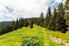 Natura lungo la strada di riciclaggio da Malino Brdo a Revuce in Slova Immagine Stock