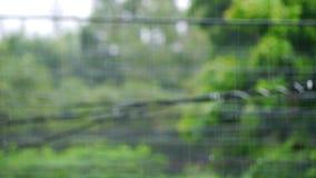 Natura materiału filmowego klamerka dla prezentaci bokeh i padać obcieknięcia tło zamazującej wody zbiory wideo