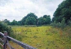 Natura media di estate, Inghilterra Fotografia Stock