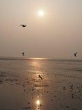Natura moment ptaki i morze Obraz Stock