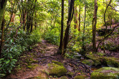Natura in montagne blu Australia Immagini Stock Libere da Diritti