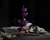 Natura morta, annata funghi, orchidea su una tavola di legno scura arte, vecchie pitture Immagine Stock