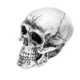 Natura morta, in bianco e nero del cranio umano su fondo bianco, A Fotografia Stock Libera da Diritti