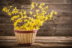 Natura morta con i fiori della molla Fotografia Stock