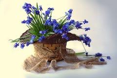 Natura morta con i fiori della molla in un canestro fotografia stock