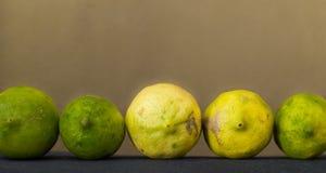 Natura morta con i frutti organici del limone in una fila Fotografia Stock Libera da Diritti