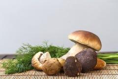 Natura morta con i funghi bianchi Immagine Stock